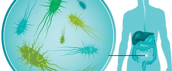 To Run Farther, The Gut's Bacteria Is The Key