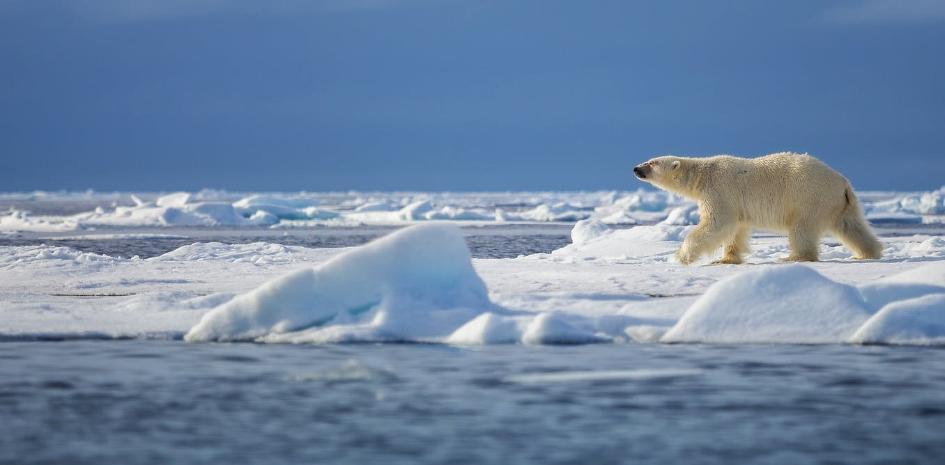Artic Sea Ice Can Go Again High but with A Twist